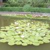 4 Правила посадки водних рослин