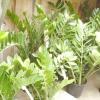 Кімнатні рослини як обереги для дому