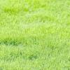 Газон рулонний - різнобарвності трав і чистий, наповнений квітковим ароматом повітря