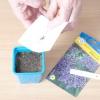 Геліотроп: вирощування з насіння