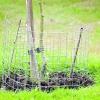 Яблуні і груші: календар робіт в саду