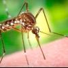 Комарі та гігієна