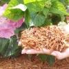 Мульчування грунту - це важливий агротехнічний прийом