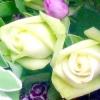 Не знаєте, як висловити почуття? квіти - найкращий помічник.