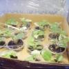 Перевезення рослин взимку