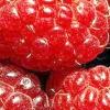 Чому багатьма садівниками практикується посадка малини восени і в чому її переваги