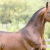Чому орловську породу коней називають символом відроджується росії?