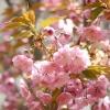 Сезонні роботи в саду і городі: третій тиждень квітня