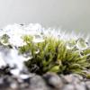 Сезонні роботи в саду і городі: третій тиждень лютого