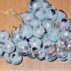 Сорти винограду для захоплених