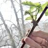 Живці винограду: як укоренити