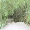 У бамбуковому гаю приморського парку