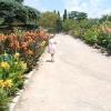 Виставка канни садової Нікітського ботанічного саду