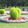 Квітникарям на замітку