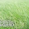 Газонні трави - плюси і мінуси