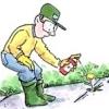 Гербіциди та інсектициди в саду - користь чи шкода