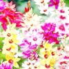 Іксія - зоряні квіти в саду
