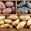 Як виростити хороший і великий урожай картоплі