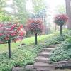 Контейнерний сад своїми руками - це просто!