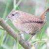 Комахоїдні птахи - найкращі захисники саду та городу