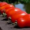 Правильне зберігання помідорів, температура дозаривания помідор