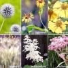 """Рослини для квітника в природному стилі: """"скелет"""", """"рядові"""" і """"повітря"""""""