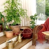 Рейтинг популярних кімнатних рослин