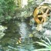 Створення штучних водойм та декоративних ставків