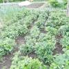 Вдалі види мульчі для саду та городу