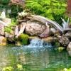 Водойма з рослинами