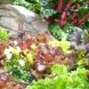 Вирощування овочів на городі