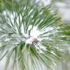 Зимові картини саду: форма, фактура і текстура