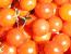 Основні шкідники томатів і способи боротьби з ними